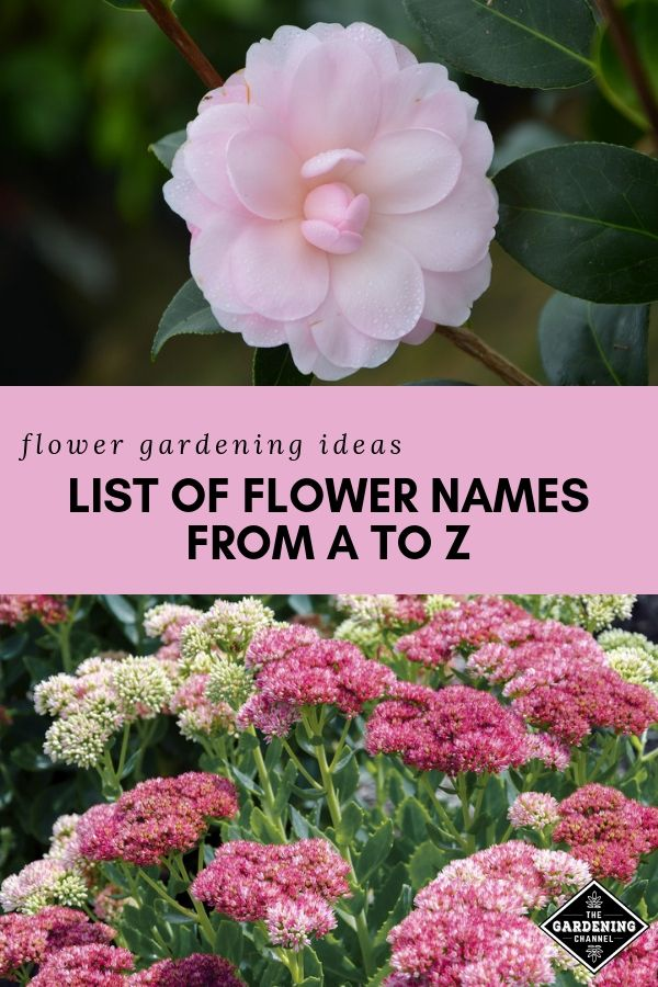 List of Flower Names, from A to Z Gardening 101