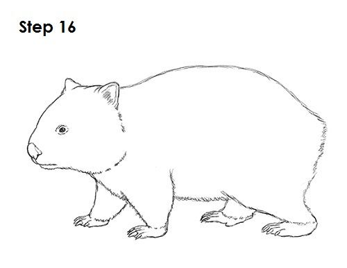 Line Drawings Of Australian Animals : Wombat drawing animal silhouettes vectors clipart