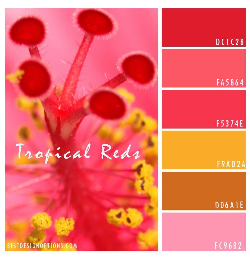 red-flower-color-palette | Color palettes | Pinterest | Hibiscus ...