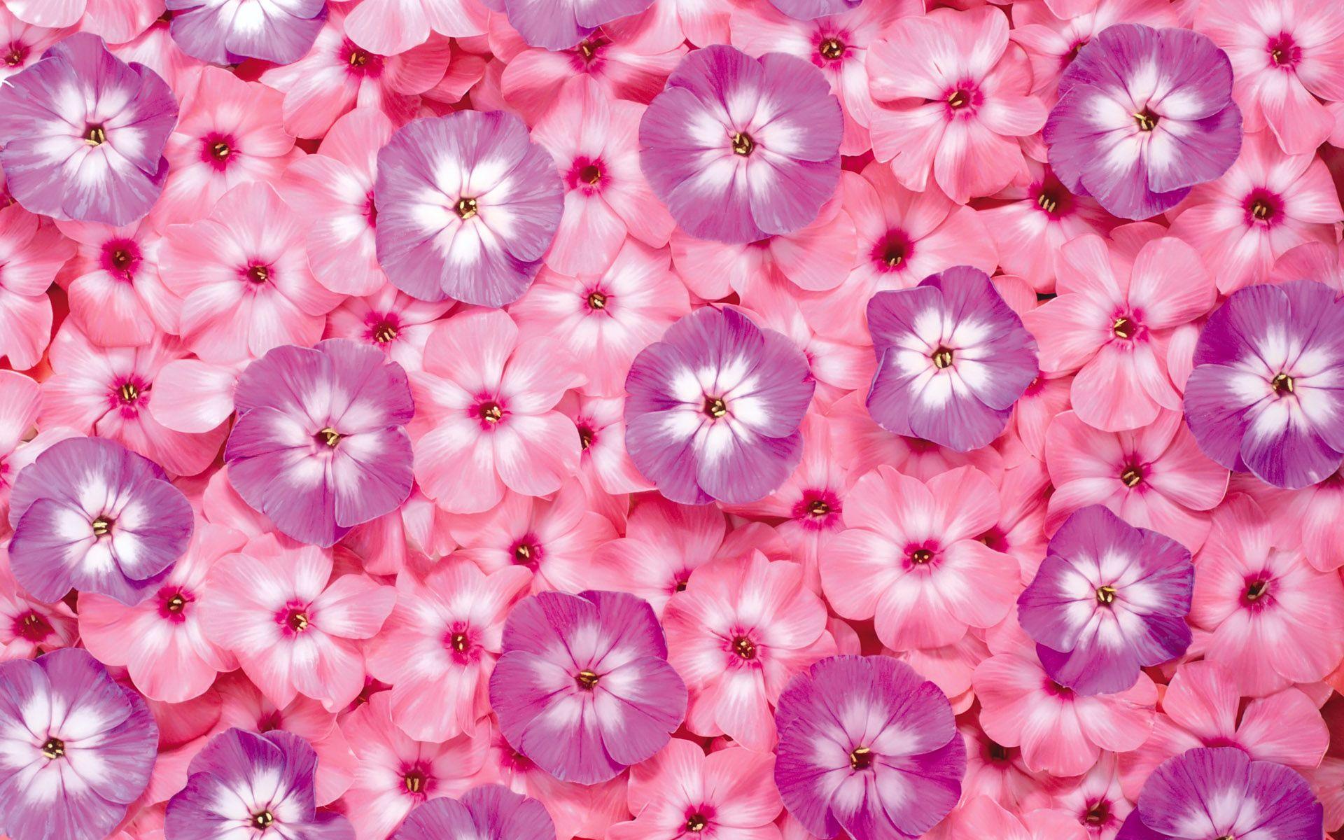 1920 The First Series Of Flowers Background 13647 Flower Desktop Wallpaper Purple Flowers Wallpaper Pink Flowers Wallpaper Coolest flower wallpapers hd