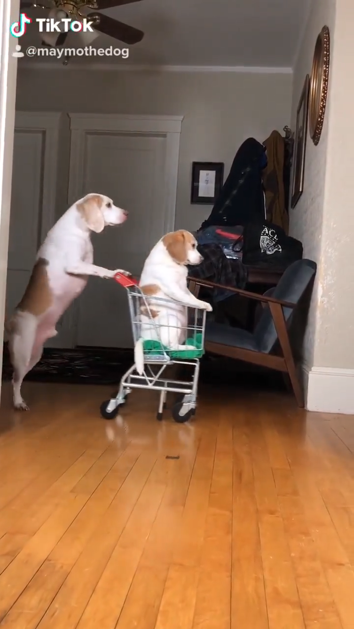 Photo of funny dogs memes videos