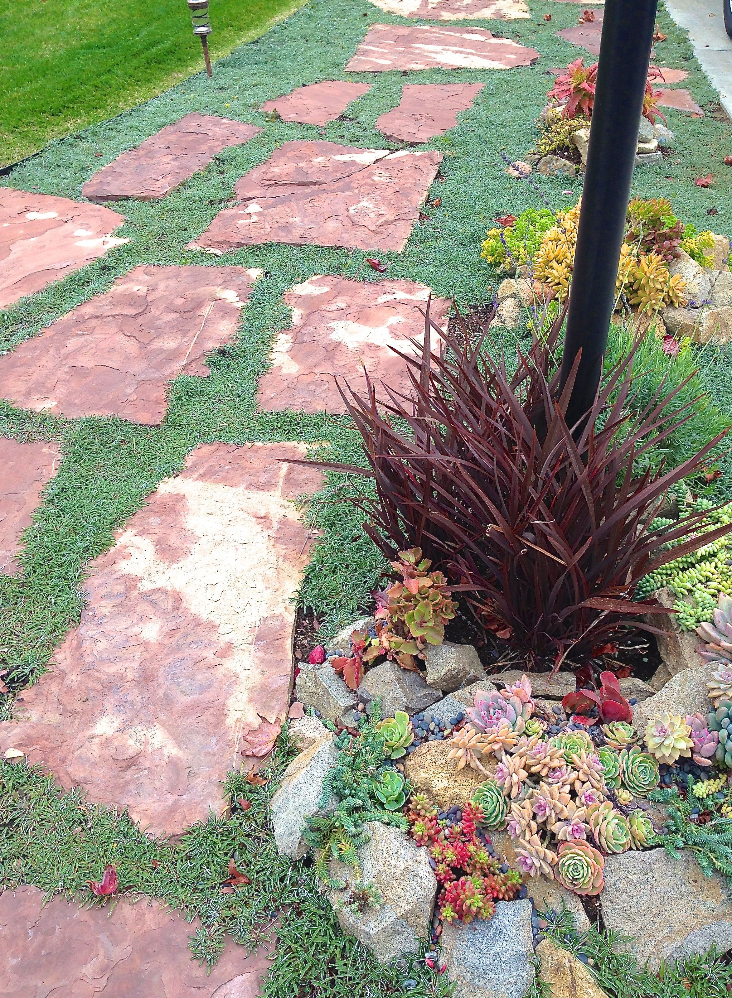 How to plant ground cover between pavers - Succulent Pathway With Flagstones To Front Door With Dymondia Ground Cover