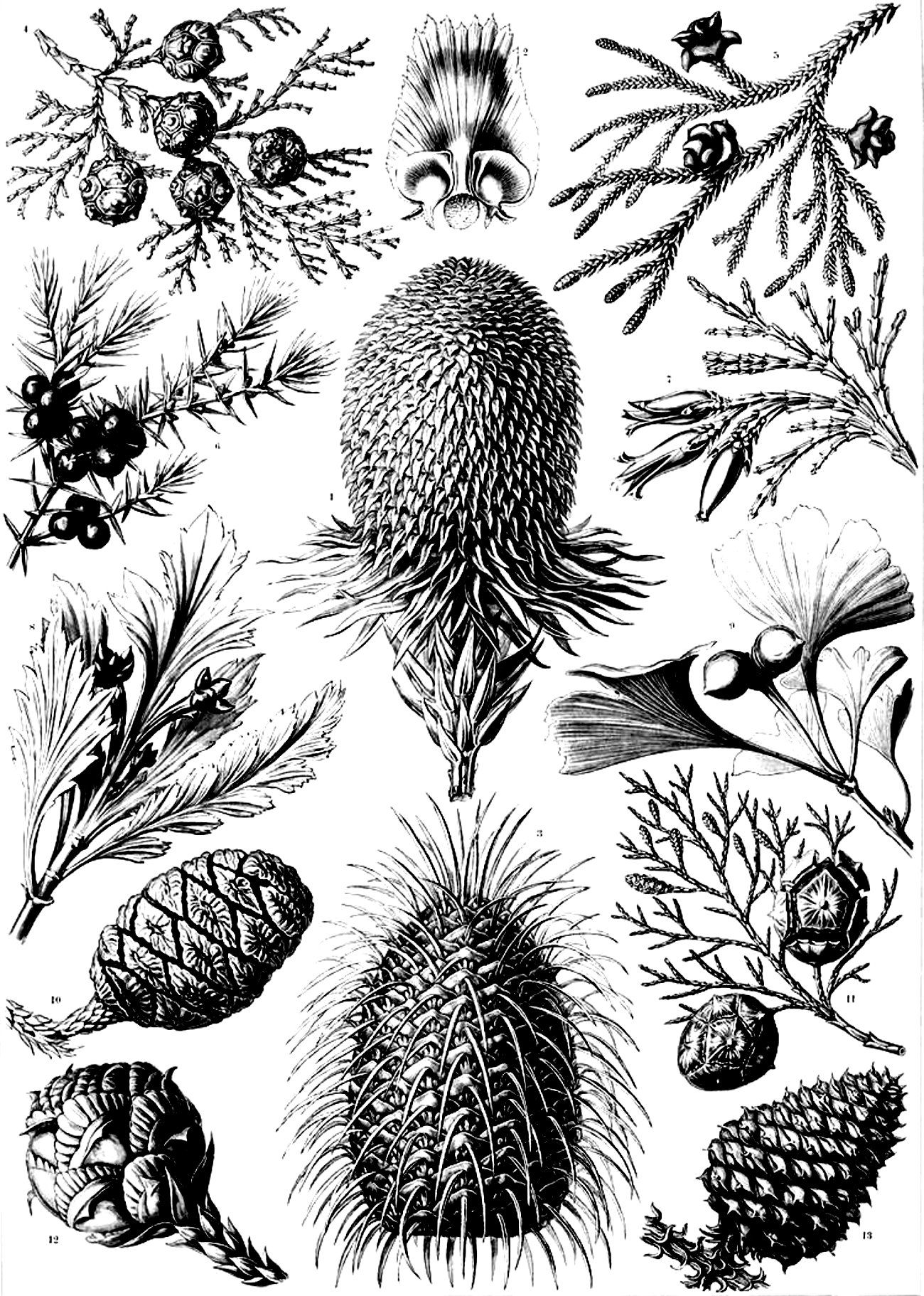 Coloring pictures of flowers and trees - Free Coloring Page Coloring Old Engraving Flowers Vegetation Coloring Old