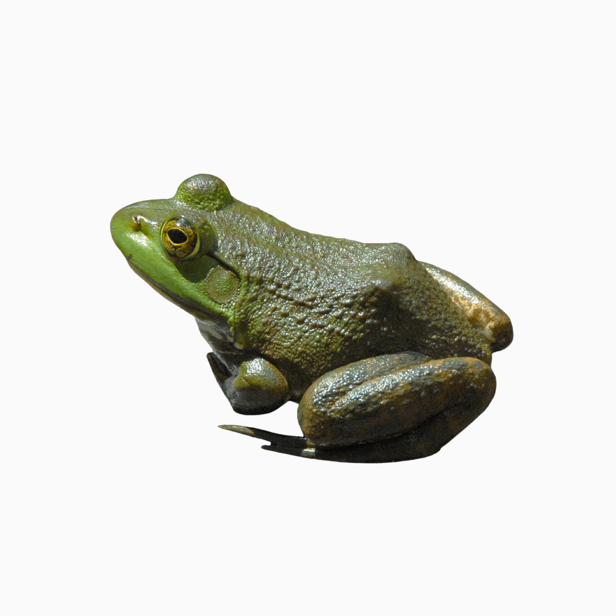 Frog Png Cloudyy Png Insta Png Small Pets Flower Aesthetic