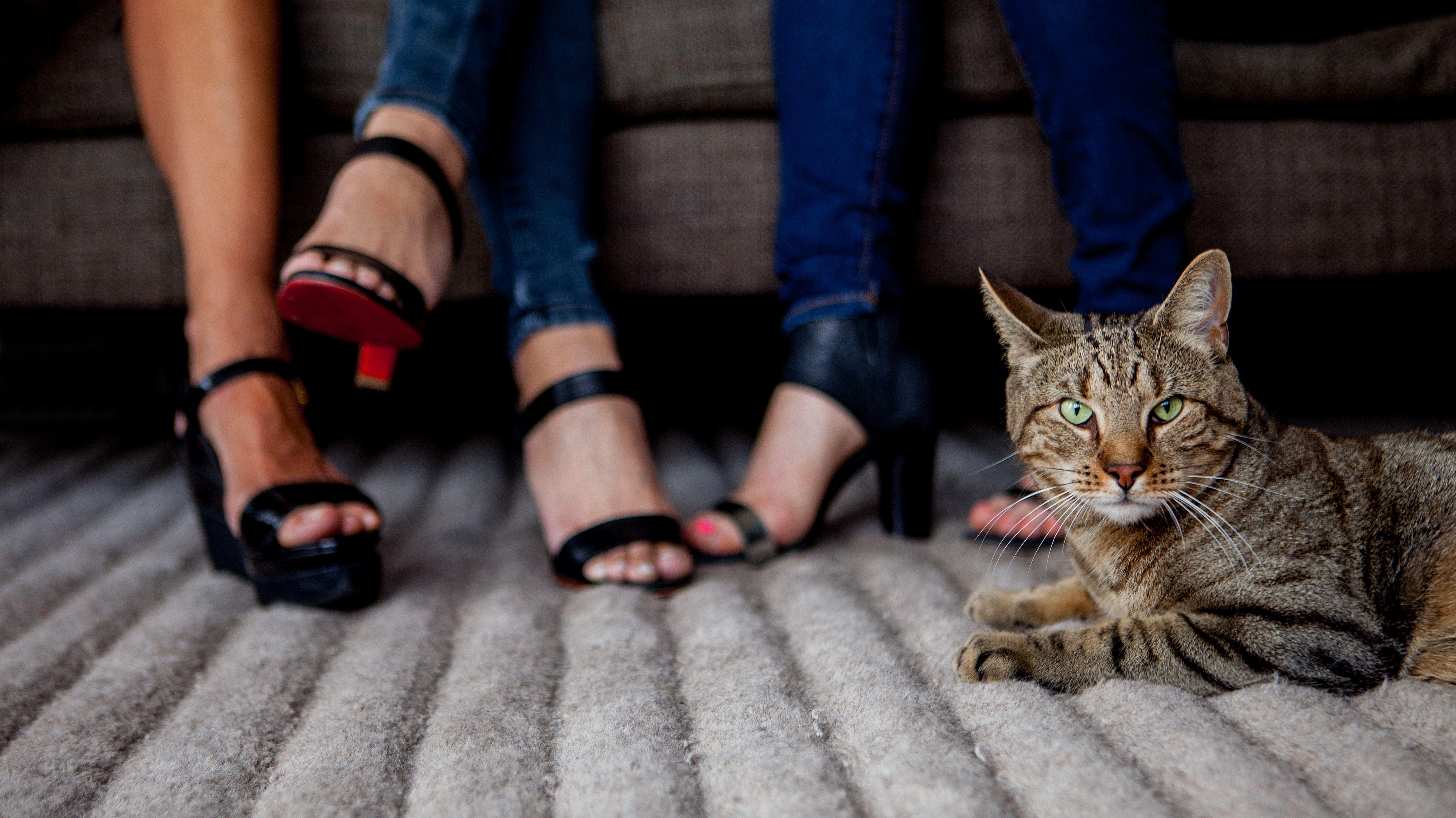 Koneko Cat Cafe Cat Cafe Cats Kitten In Japanese