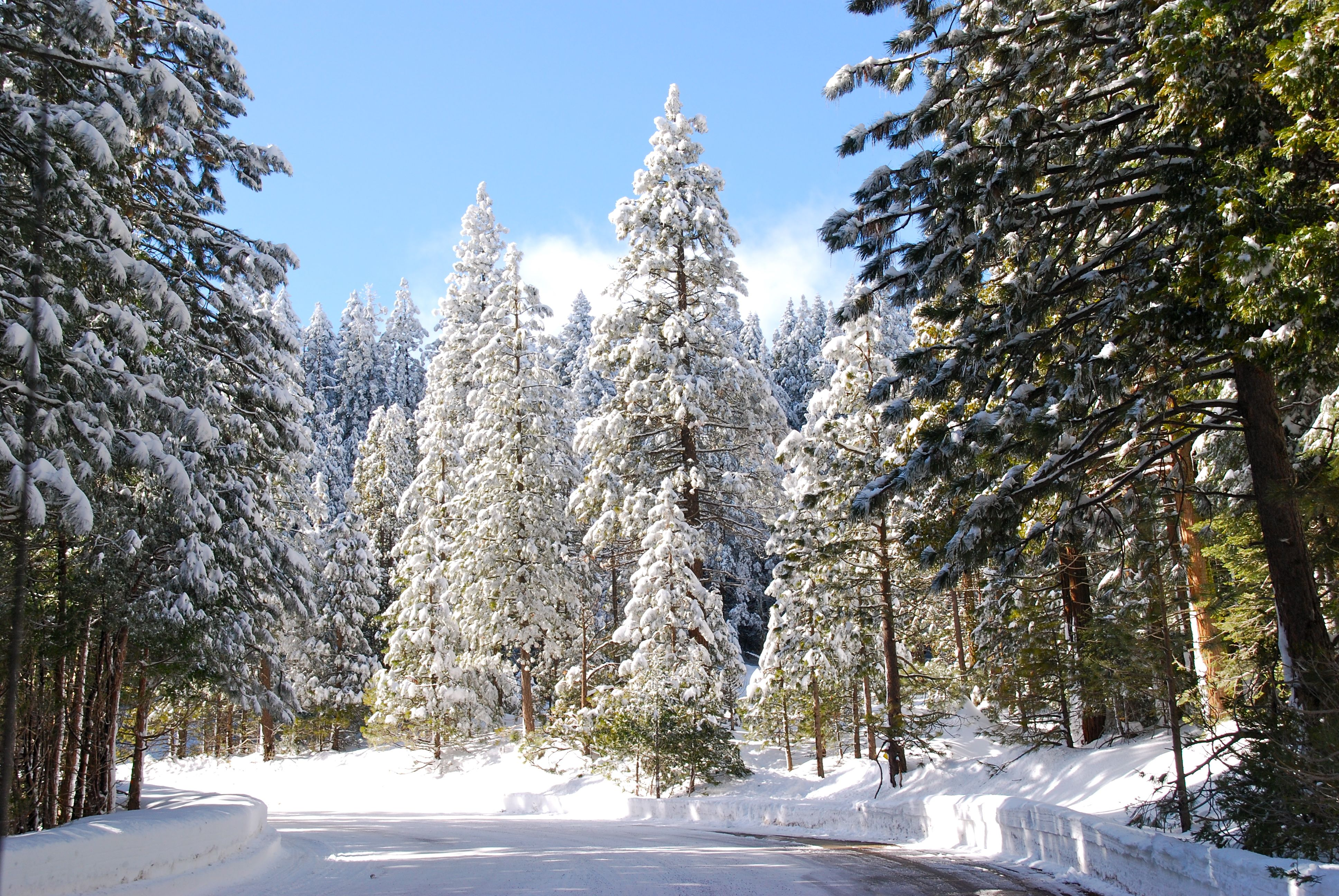 Sequoia National Forest California California Vacation
