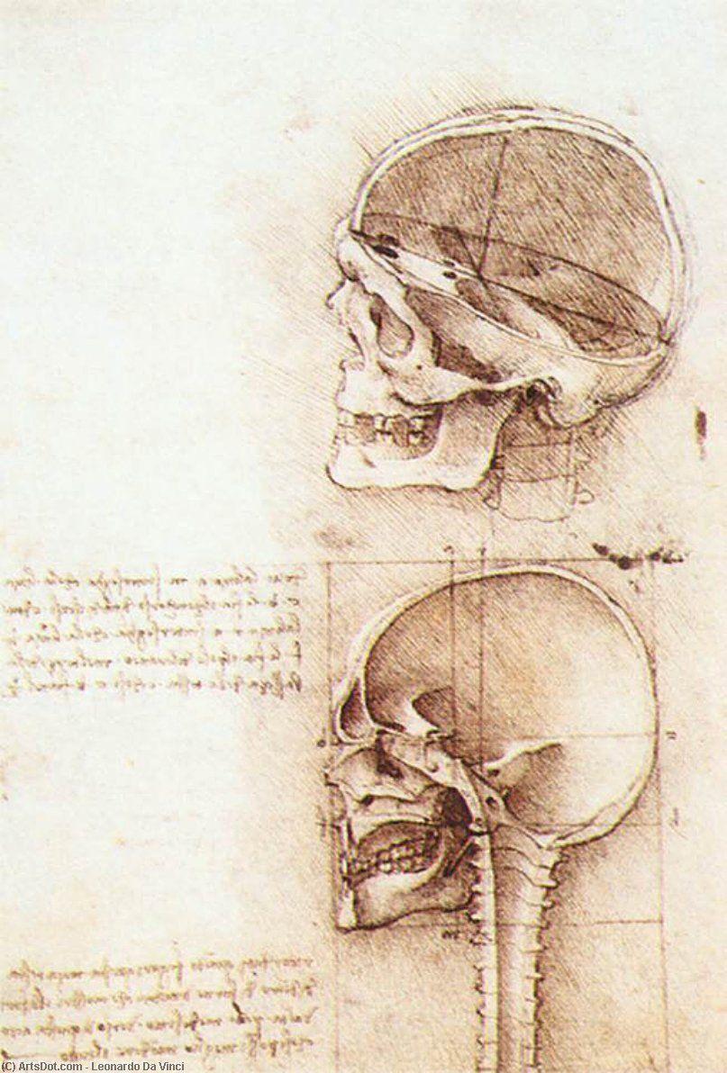 Leonardo Da Vinci-des études des humaine crâne | Leonardo Da Vinci ...