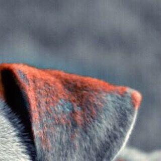 #doggo #dogs #dogphoto #doglover #dogsofinstagram #dogphotography #dogportrait #doggie #happydog #dogslife #pup #puppy #puppyportrait #canine #miniaturepoodle #smalldogs #photography #photooftheday #photographyislife #photoshoot #petsofinstagram #petphotography #petphoto #fujifilm_xseries #hound #labsofinstagram #labrador #goldenretriever #happydog #happy