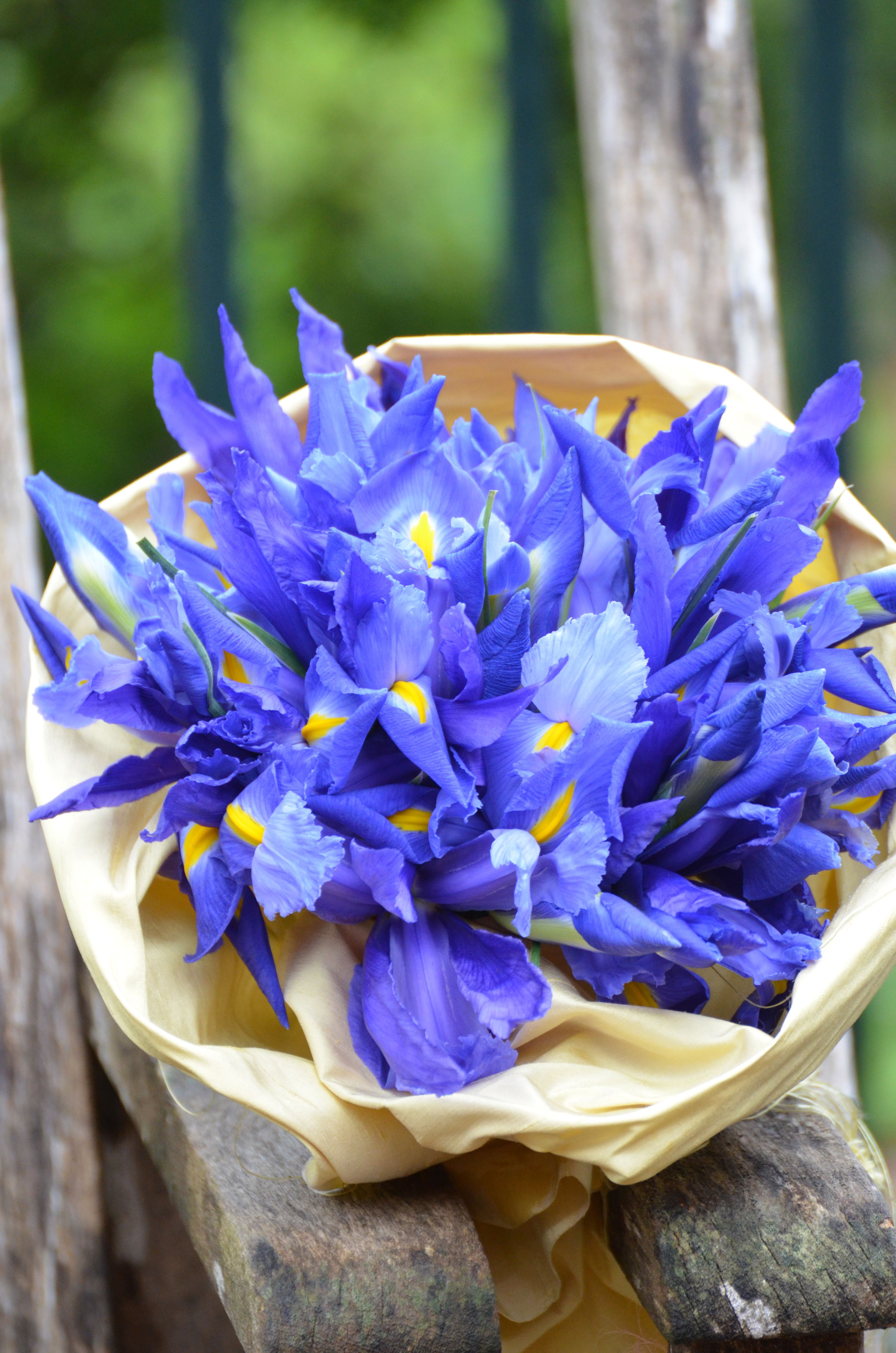 Love The Color Of This My Dream Wedding Pinterest Iris Bouquet