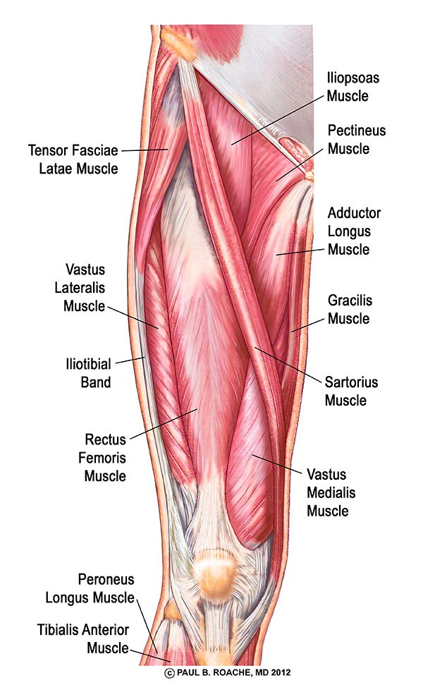Understanding the Hip Anatomy Muscles for Yoga