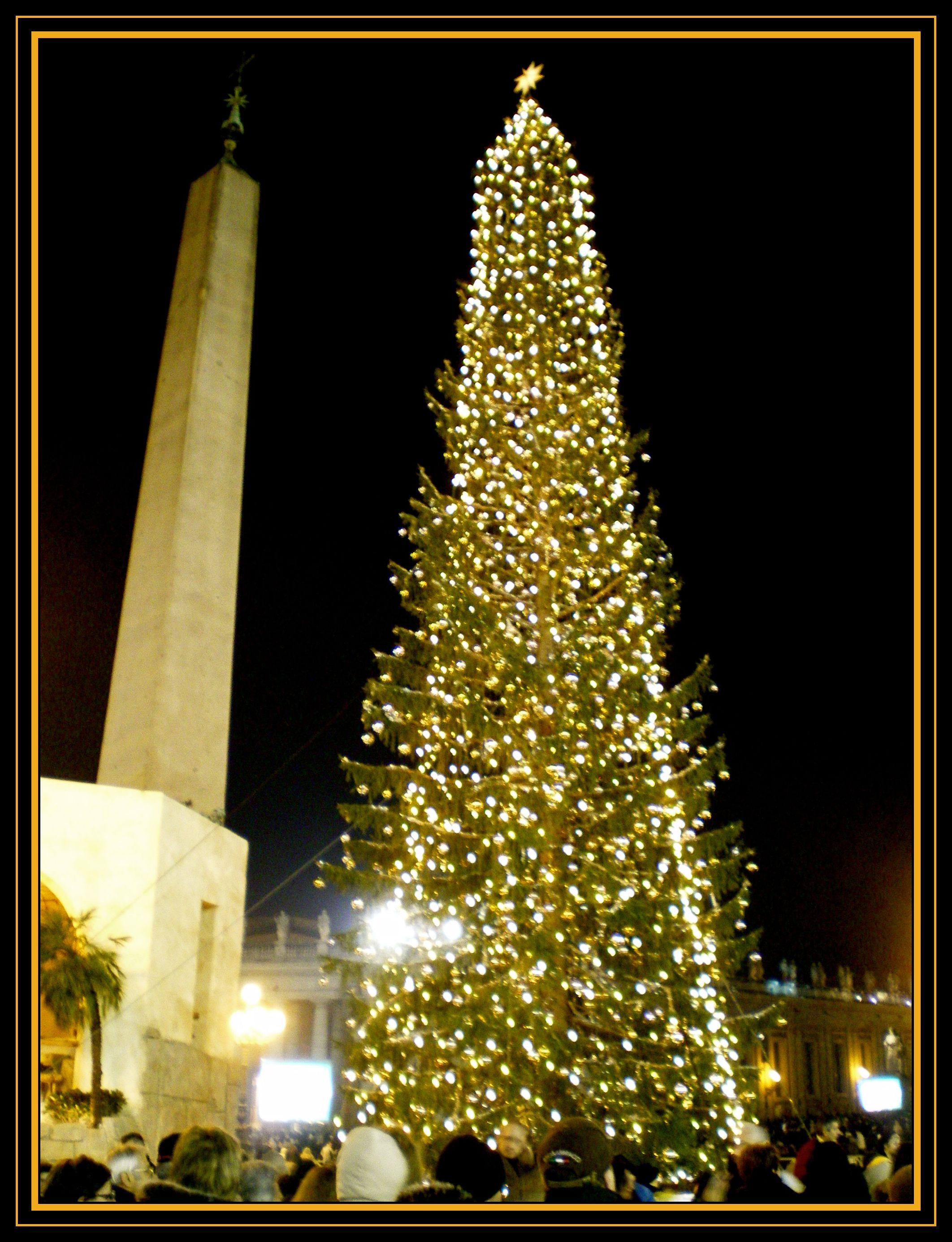 Christmas trees, Vatican city and Rome on Pinterest