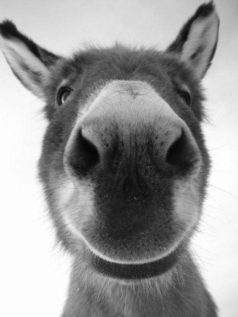 Photo of Sophia Smiling – Donkey