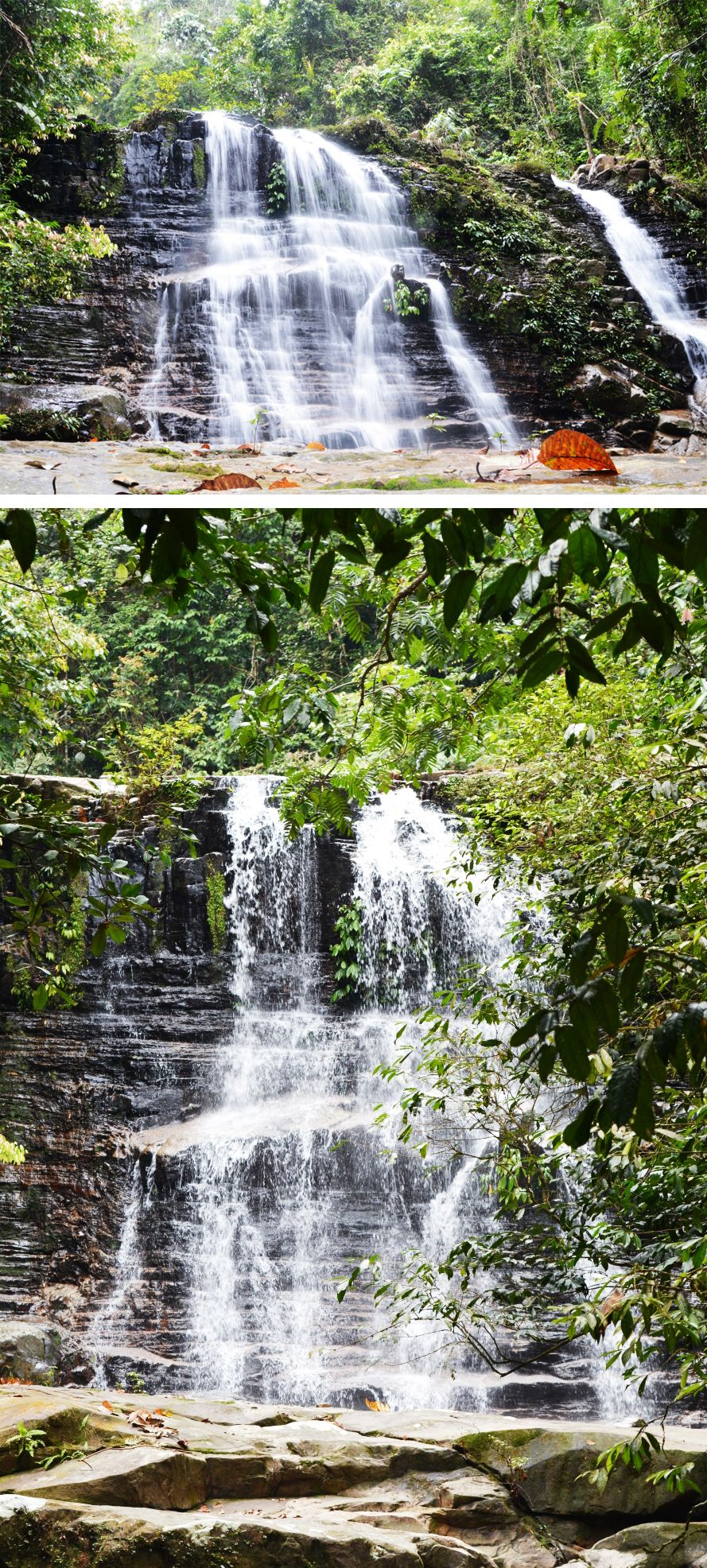 Kubah National Park Malaysia Borneo Near Kuching Waterfall Trail Waterfall Trail National Parks Waterfall