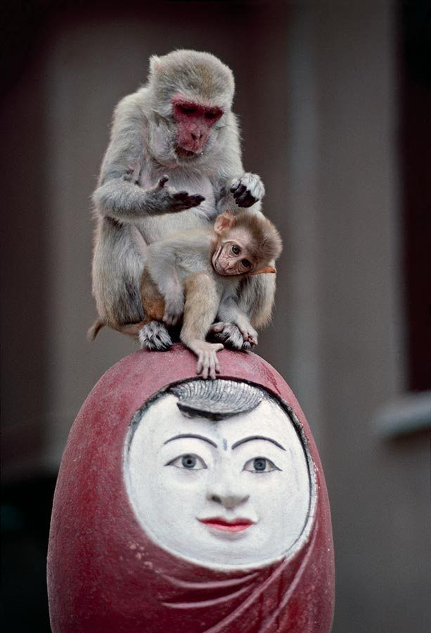 Burma - Steve McCurry