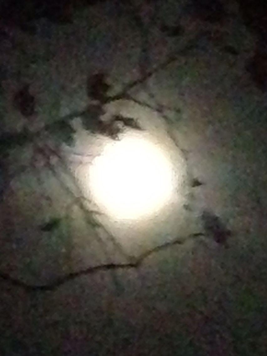 Marigrace Zito  Photo Full moon