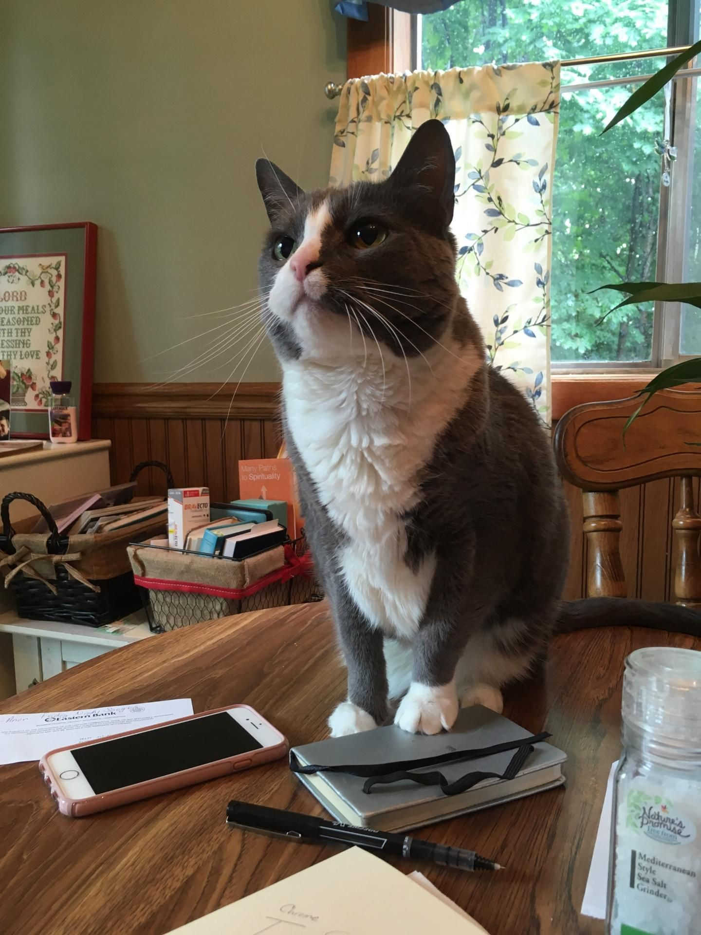 Adopt Toby On With Images Humane Society Senior Cat