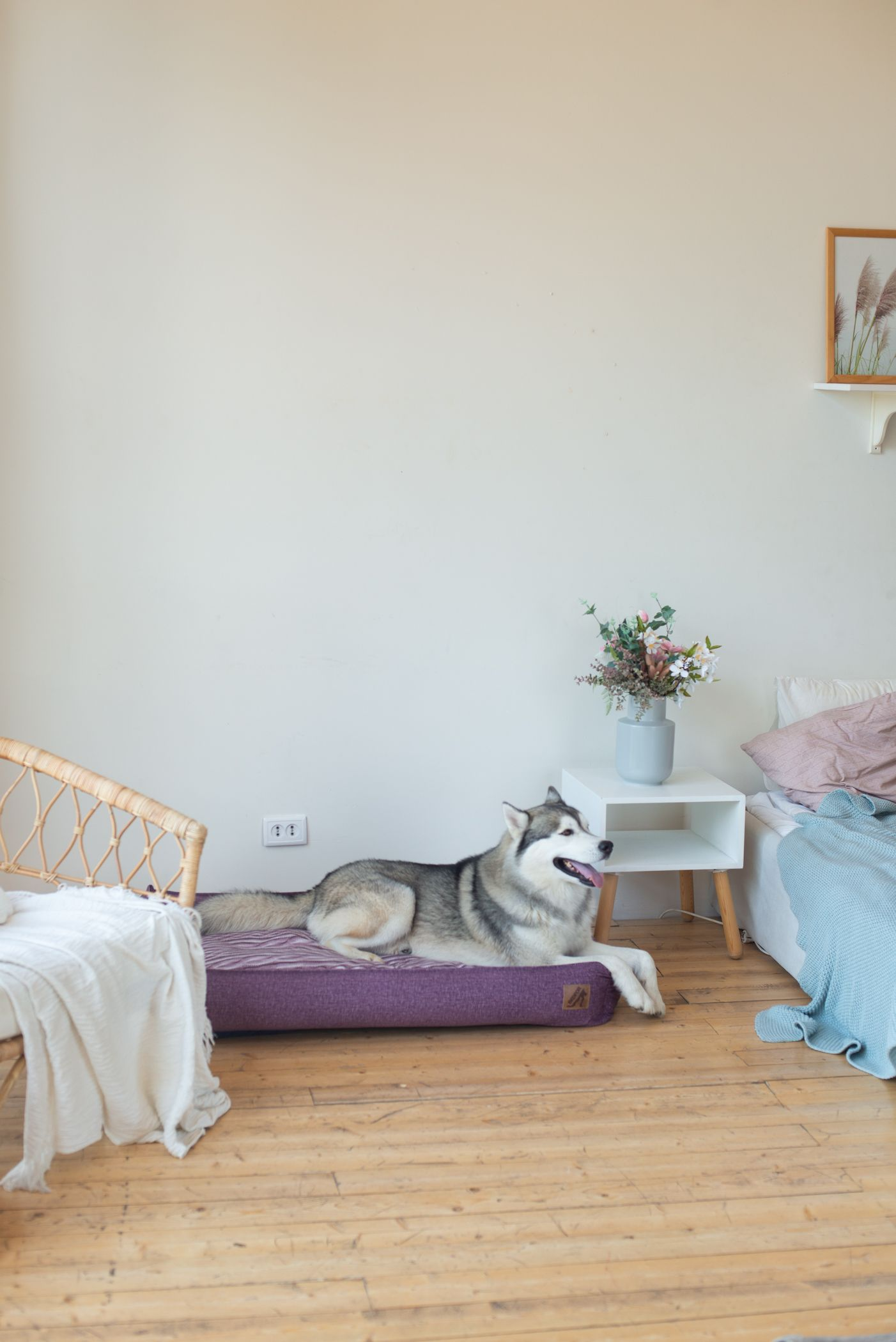 Dog bed with removable washable covers в 2020 г