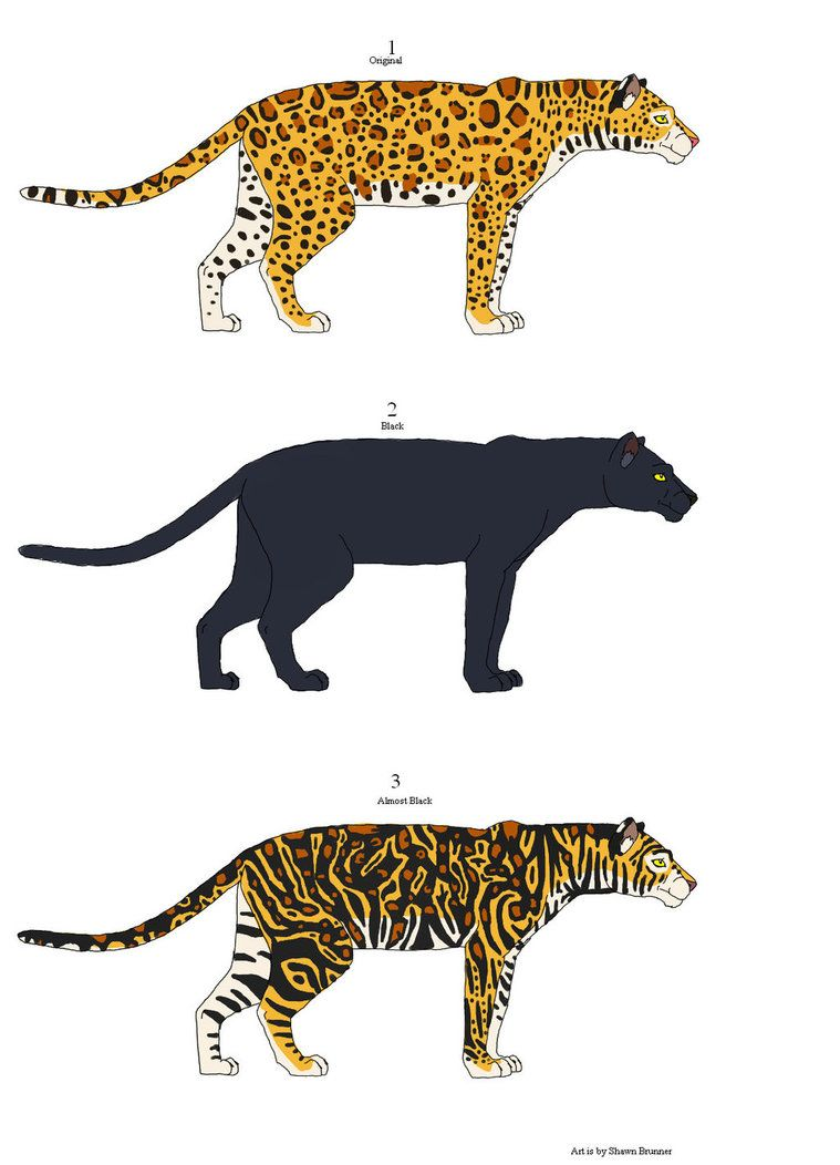leopard vs jaguar vs panther vs cheetah Google Search