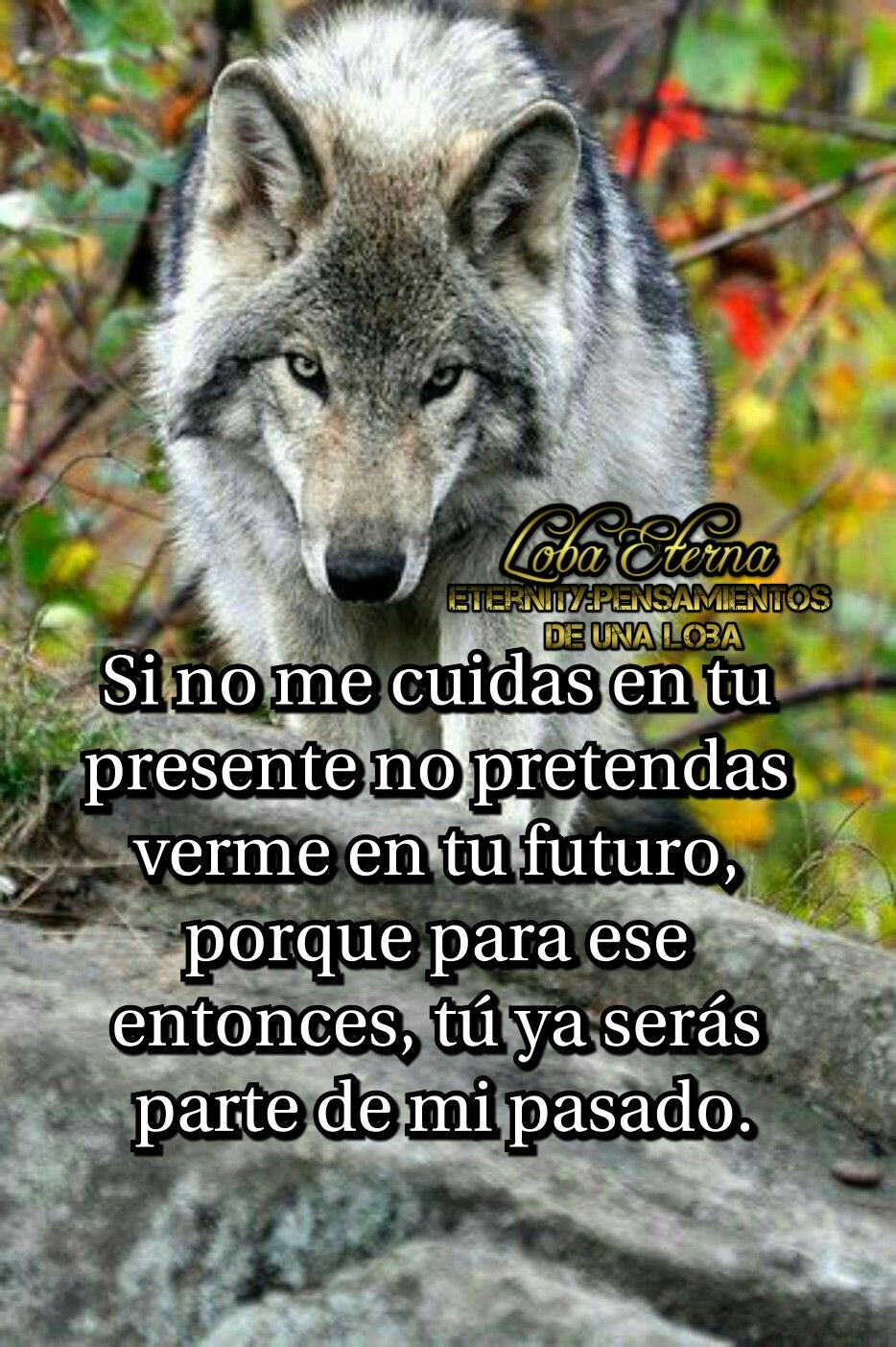 Lobos Frases Buscar Con Google Mensajes Pinterest Wolf Wolf