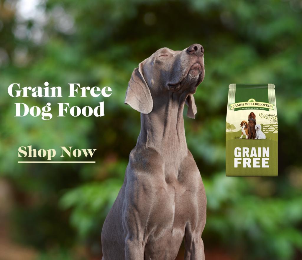How Much Should I Feed My Dog Dog Feeding Guide James Wellbeloved Dogs Dog Food Recipes Healthy Dog Food Recipes