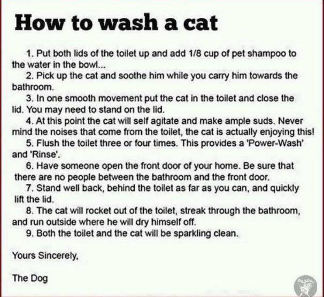 Imgur The Most Awesome Images On The Internet Laughing So Hard Pet Shampoo Cat Wash