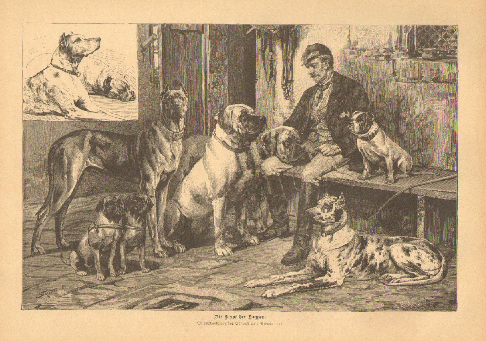 Great Dane Mastiff Bull Dog Pug Vintage 1890 German Antique