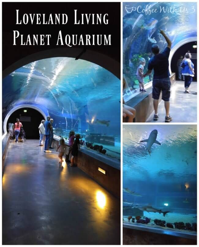 Loveland Living Planet Aquarium is a must-see if you're ...