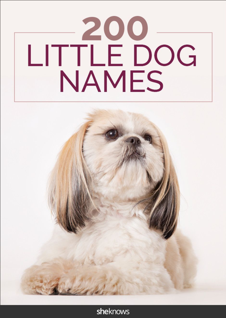 These cute dog names are perfect for tiny canines with
