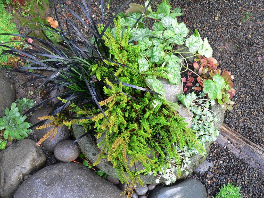 outdoor winter planter pots pacific northwest google search