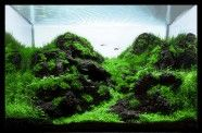 Aquascaping World Competition - Gallery   Mystique - Hector Baca, Mexico  http://www.aquascapingworld.com/competition/?page=gallery#