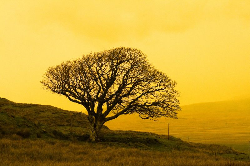 A lone tree near the Sound of Islay Scotland