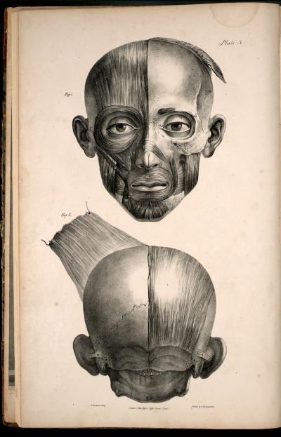 Anatomia Collection Uoft Libraries Plate Description Anatoma