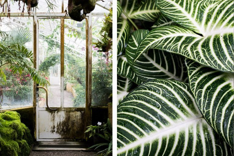 Urban Jungle Der Botanische Garten In Munchen Botanischer Garten Munchen Botanischer Garten Pflanzenblatter