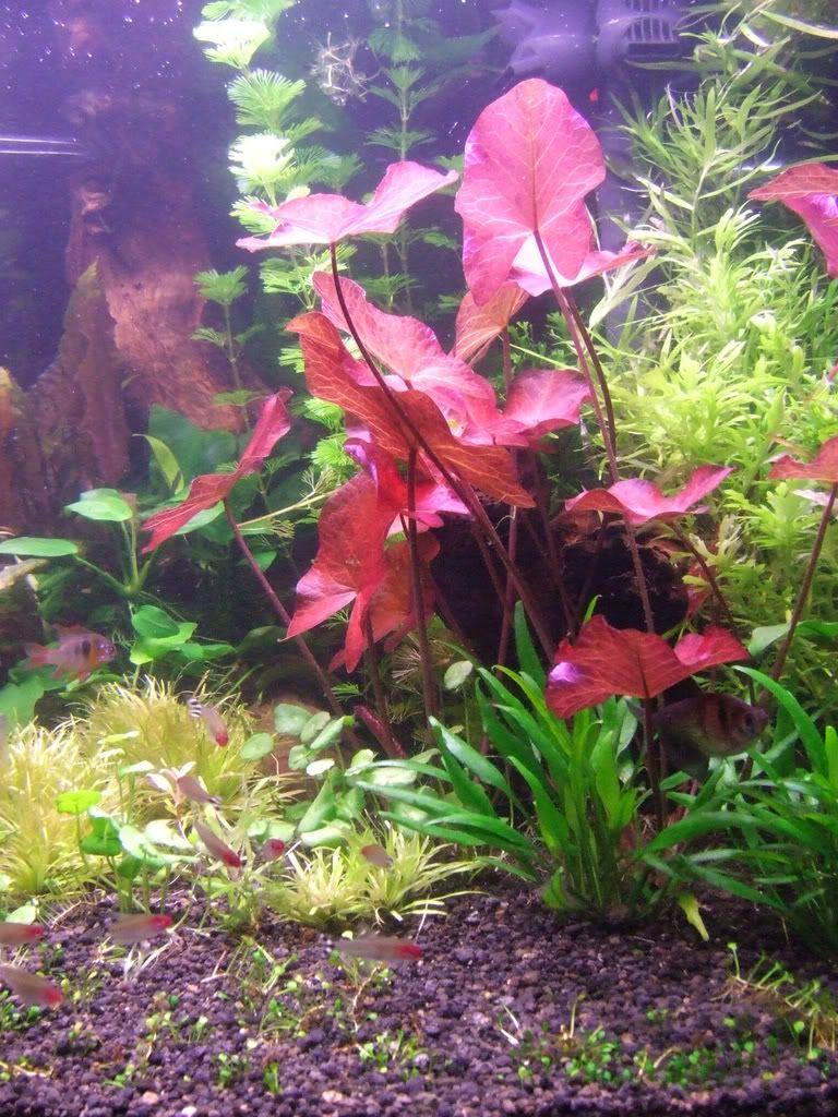 Red Lotus Care Aquarium Allcanwearorg