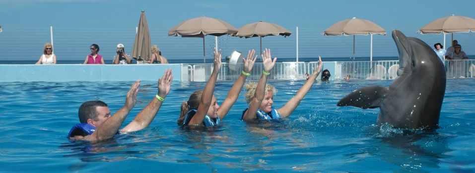 Experience Our Dolphin Encounters At Marineland And Create A Lifetime Of Memories With Images Dolphin Encounters