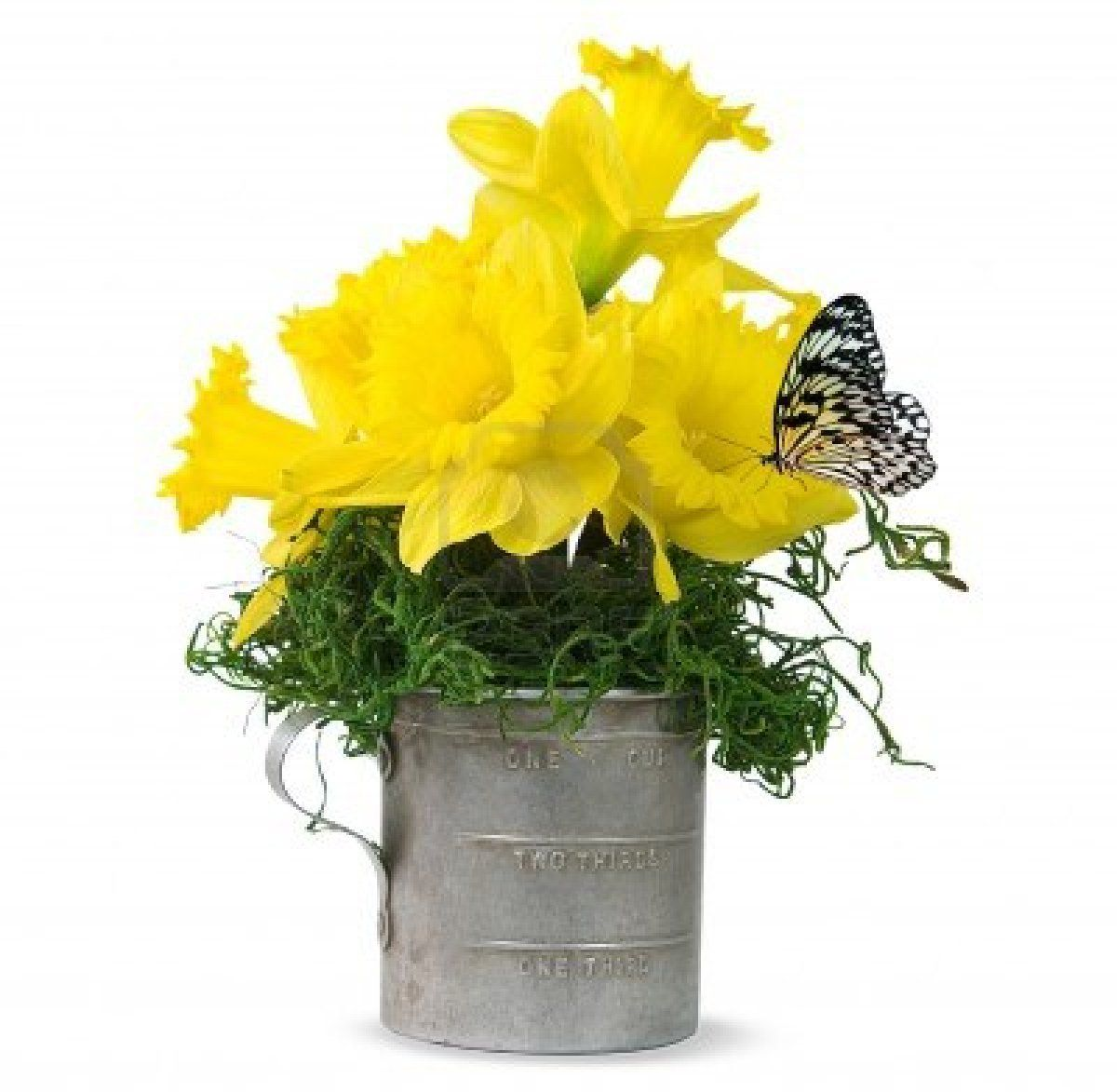 Butterfly On Daffodil Bouquet In Old Tin Cupg Vegetable