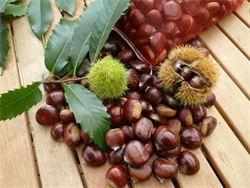 Chestnut Springs - Chestnuts