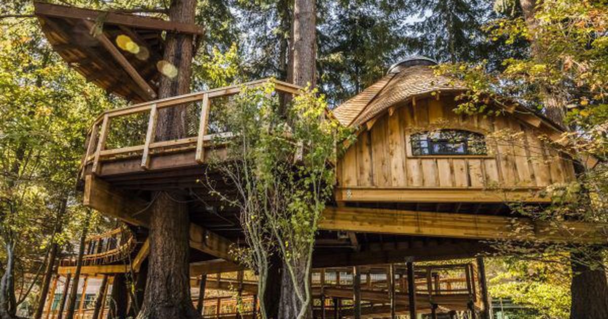 Best Microsoft Literally Built Treehouses For Its Employees 400 x 300