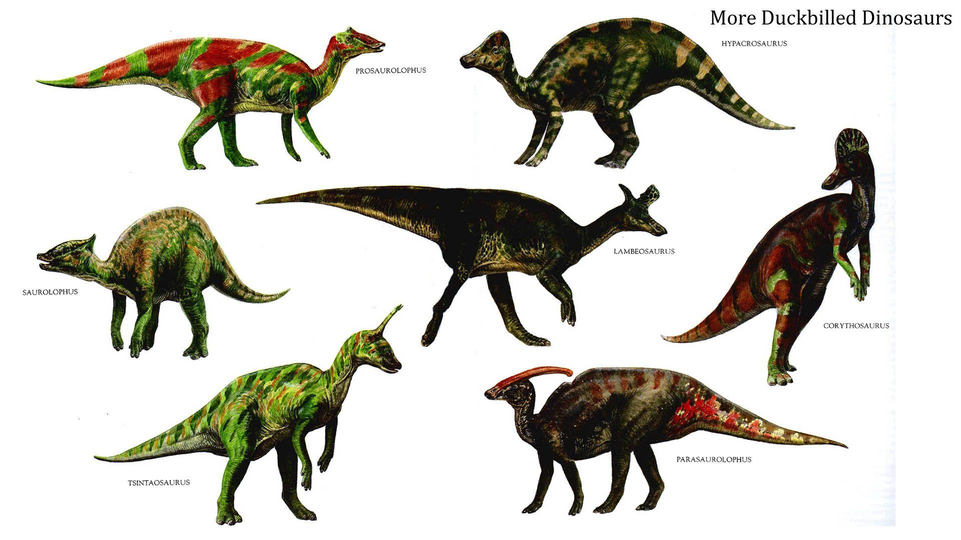 herbivore dinosaurs - Google-haku | refboard | Pinterest | Dinosaurs