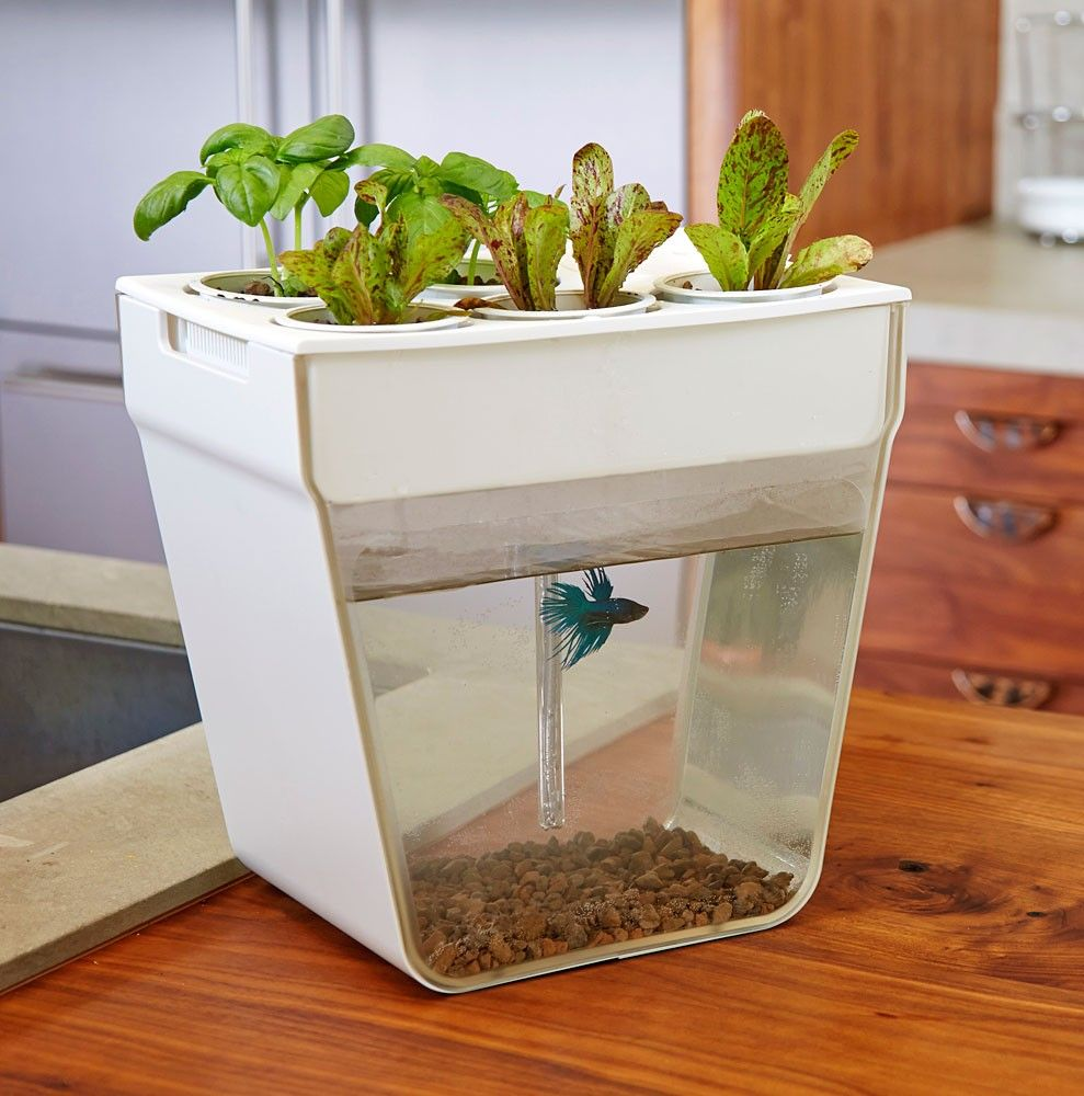 aquafarm | eartheasy | garden | pinterest | aqua farm, fish