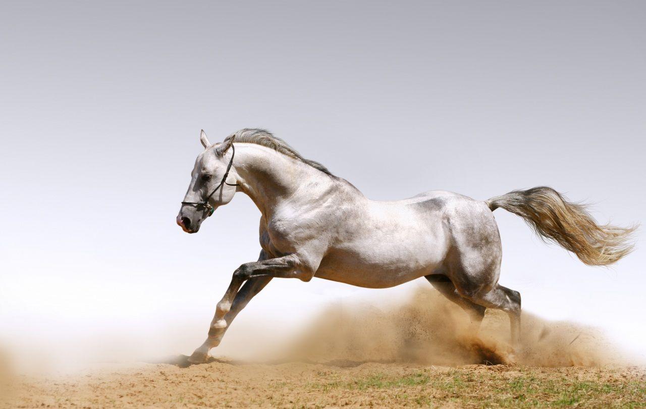 Скачущая белая лошадь