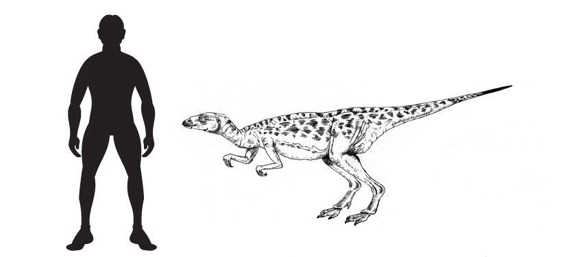 Xiaosaurus: A drawing of the small Ornithopod dinosaur