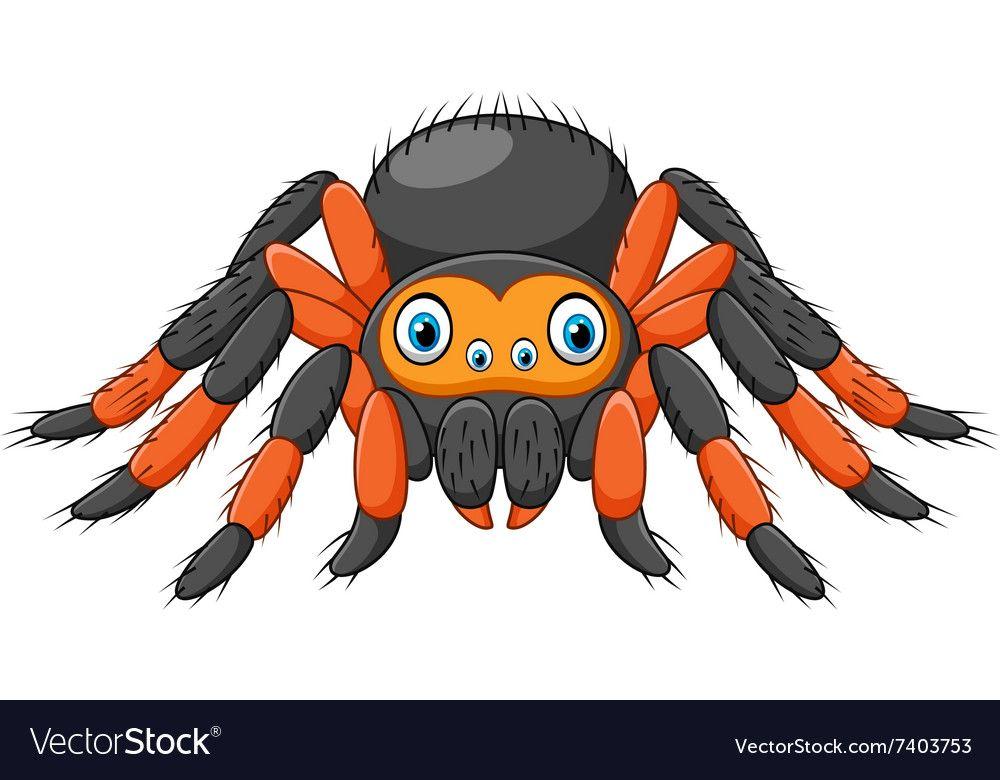 Cartoon Spider Tarantula With Red Knees Royalty Free Vector Cute Elephant Drawing Tarantula Drawing Spider Cartoon