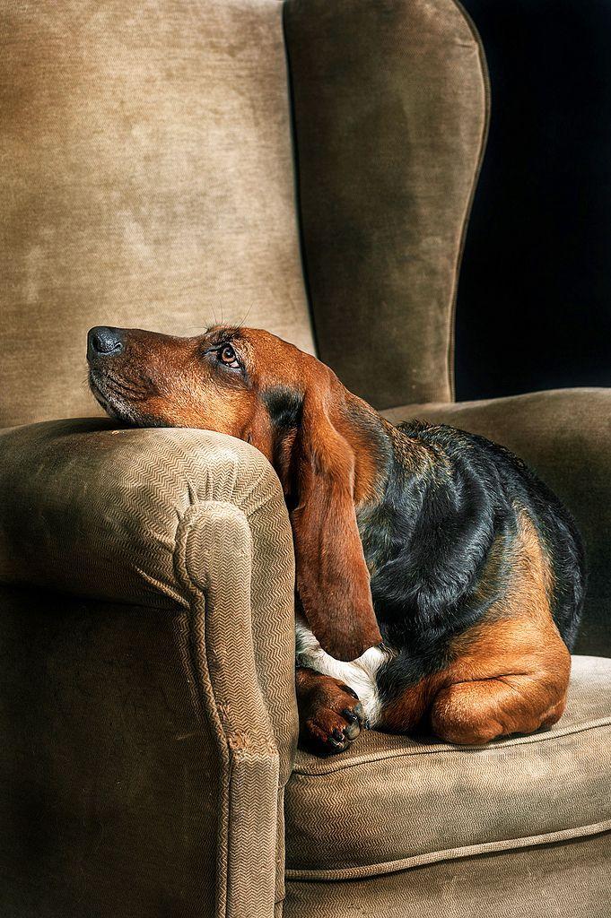прихожей собака в кресле картинка титизиан