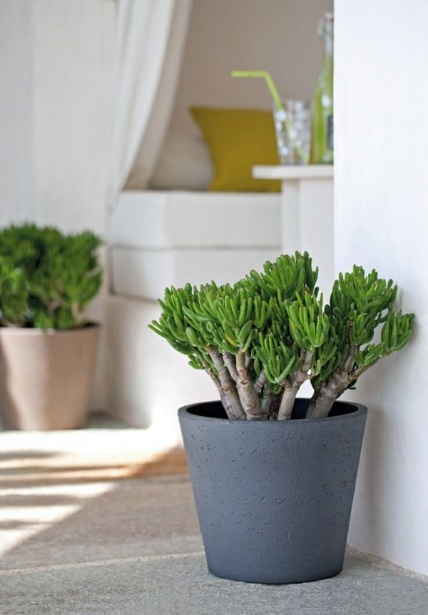 Feng Shui Plants For Harmony And Positive Energy In The Living Room Feng Shui Plants Plant Decor Feng Shui Indoor Plants