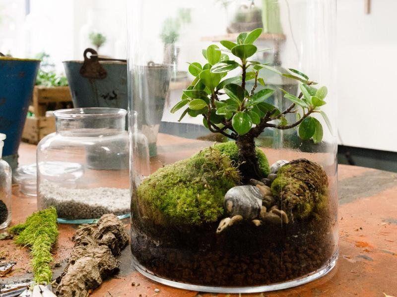 Bild zu der mini garten im glas garten pinterest for Pflanzen im glas