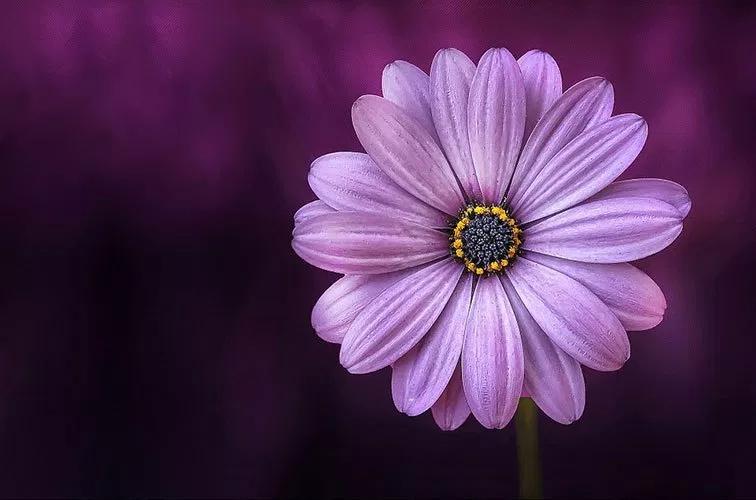 اللون النهدي هل تعرف لماذا يطلق هذا الاسم على اللون البنفسجي Flower Images Purple Flowers Flowers Photography