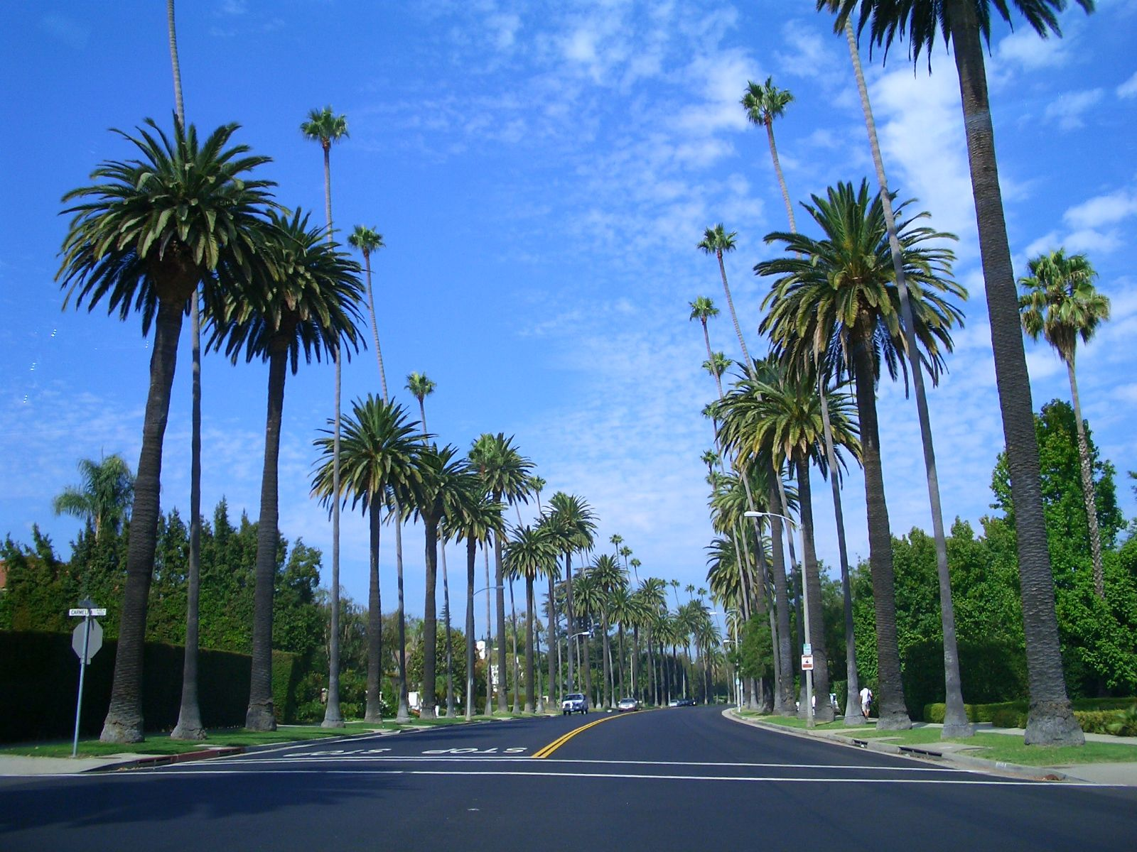 typical palm tree lined street in beverly hills views around beverly hills and los angeles. Black Bedroom Furniture Sets. Home Design Ideas