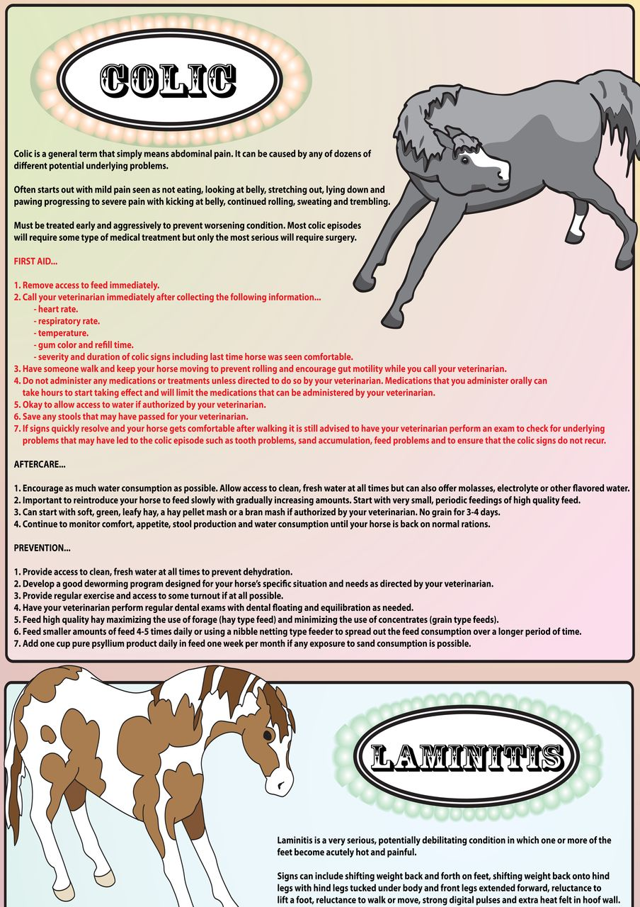 Equine first aid poster free shipping first aid poster