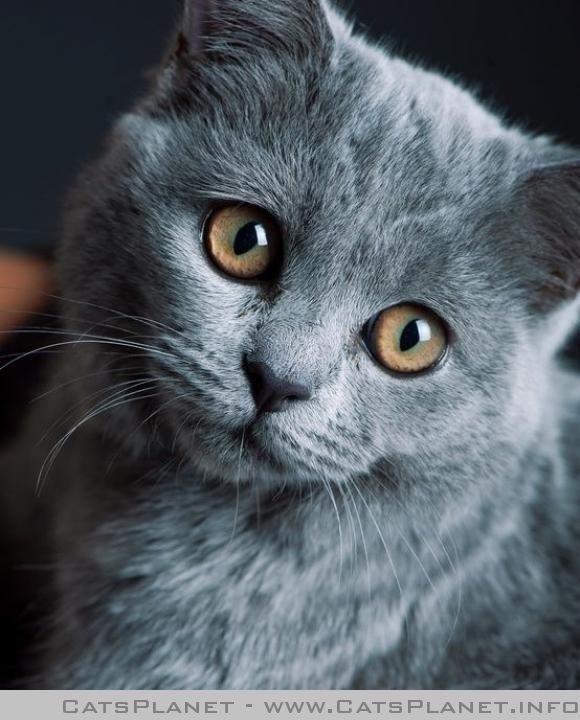 I need some cuddles. - CatsPlanet.info | Pretty cats, Cute